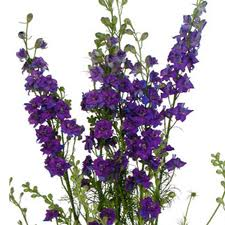LARKSPUR-PURPLE 10 STEM