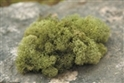 REINDEER MOSS SPRING GREEN 4 OZ/ BAG