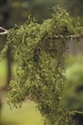 SPANISH MOSS GREEN 1 LB BAG