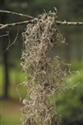 SPANISH MOSS NATURAL 1 LB BAG