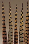 PHEASANT FEATHERS 10/BAG
