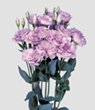 LISIANTHUS LAVENDER GROWER BUNCH