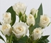 SPRAY ROSE-WHITE10 STEMS