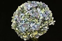 HYDRANGEA-ANTIQUE BLUE PER STEM