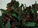 HYPERICUM-BURGUNDY 10 STEMS